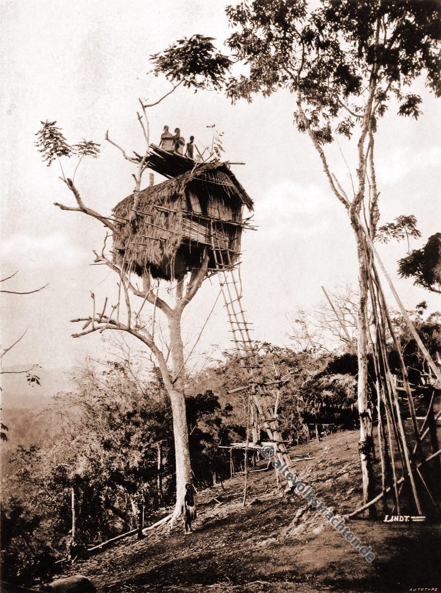 Tree house, Koiari, village, Papua, New Guinea, J. W. Lindt