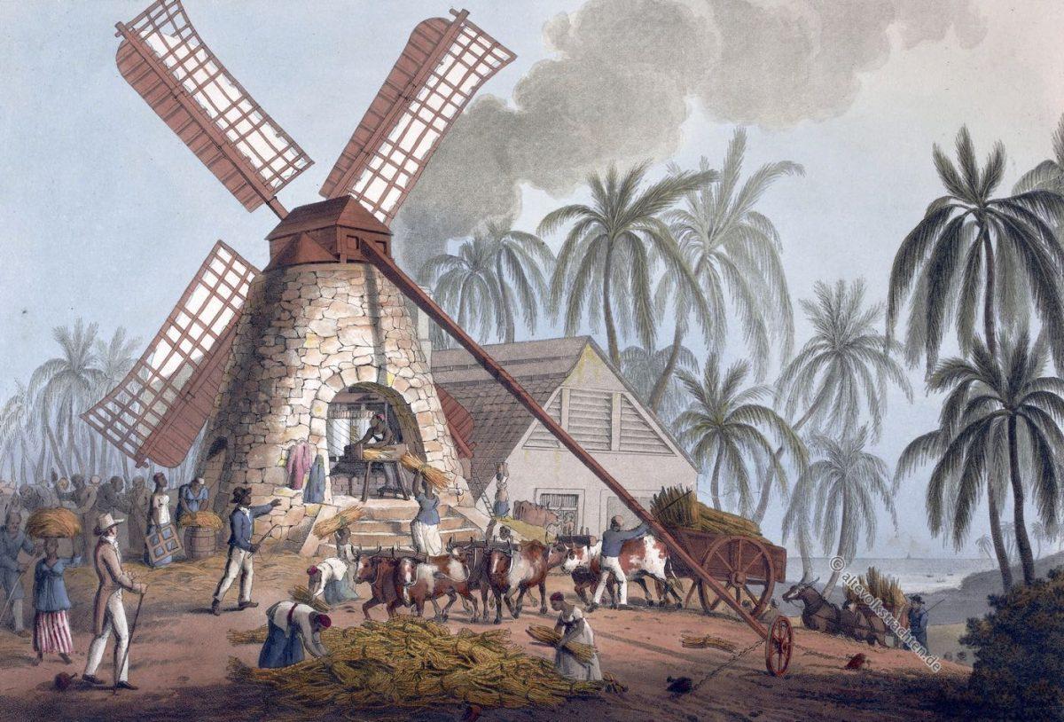 Zuckerrohrmühle, Sklaven, Zuckerrohr, Plantage, Antigua, Kolonialismus, Zuckerrohrfeld, Bermudas,