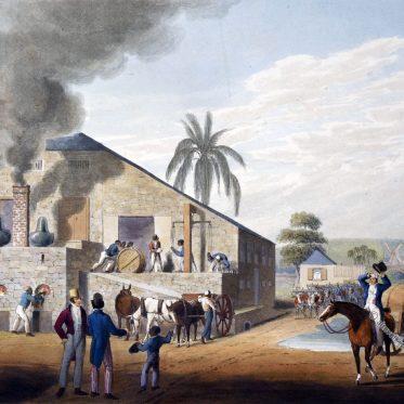 Kolonialismus, Sklaverei und Zuckerrohr in der Karibik.