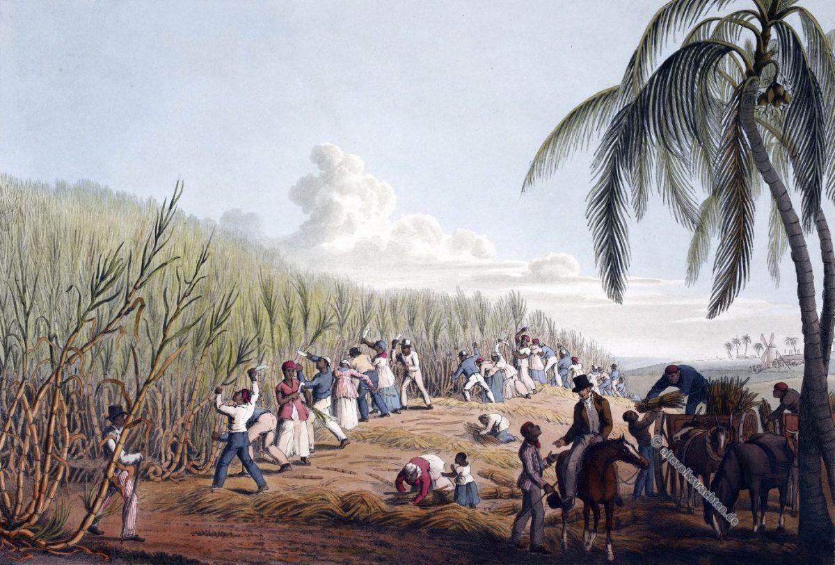 Zuckerrohrernte, Sklaven, Karibik, Zuckerrohr, Plantage, Antigua, Kolonialismus, Zuckerrohrfeld, Bermudas,