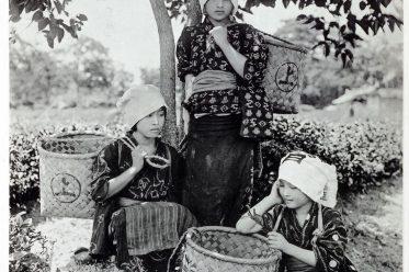 Kazuma Ogawa, Fotograf, Japan, Fotografie, Tee Pflückerinnen, Kostüm, Kimono