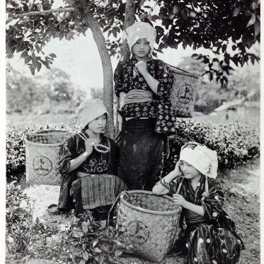 Japanische Teepflückerinnen 1892