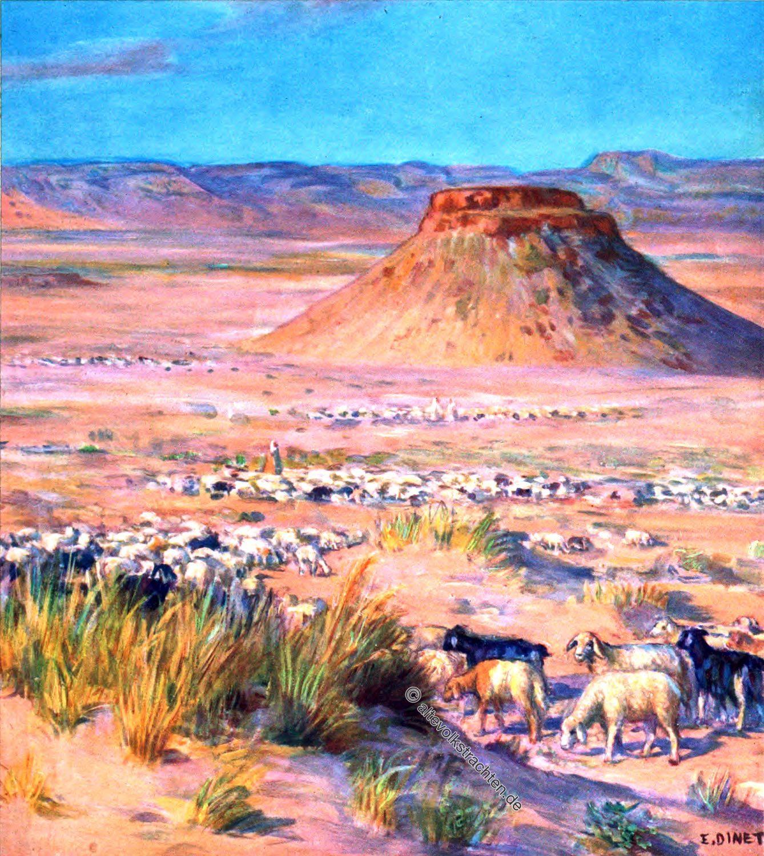 Flocks, Herden, Wüste, Saudi Arabien, Schafe, Kamele, Etienne Dinet