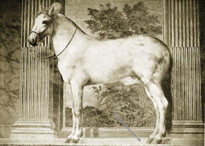 Gonzaga, Mantua, Halle, Pferde, Giulio Romano, Renaissance