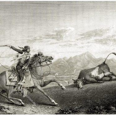 Alta California. Ein Californianos fängt einen Stier mit seinem Lasso.