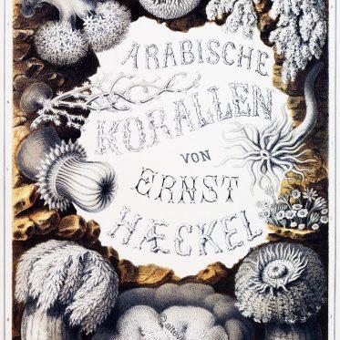 Ägypten Sinai. Arabische Korallen. Charakteristische Korallenformen.