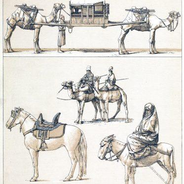 Die Tuaregs. Das Araberpferd. Reit-und Lastkamele.