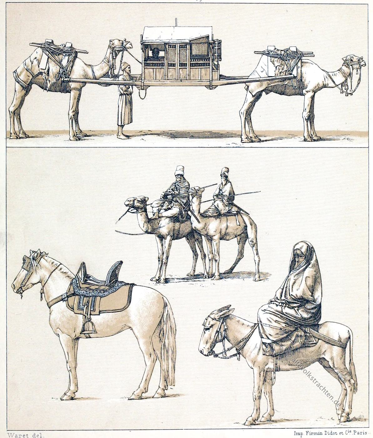 Kamele, Tuaregs, Berber, Lastkamel, Ägypterin, Strassentracht, Lasttiere,