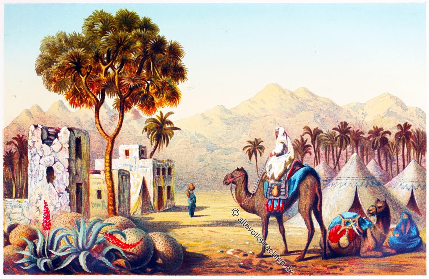 Sinai, Beduinen, Zeltlager, Ägypten, Nomaden, Haeckel,