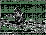 Fabel, Affe, Delfin, Illustration