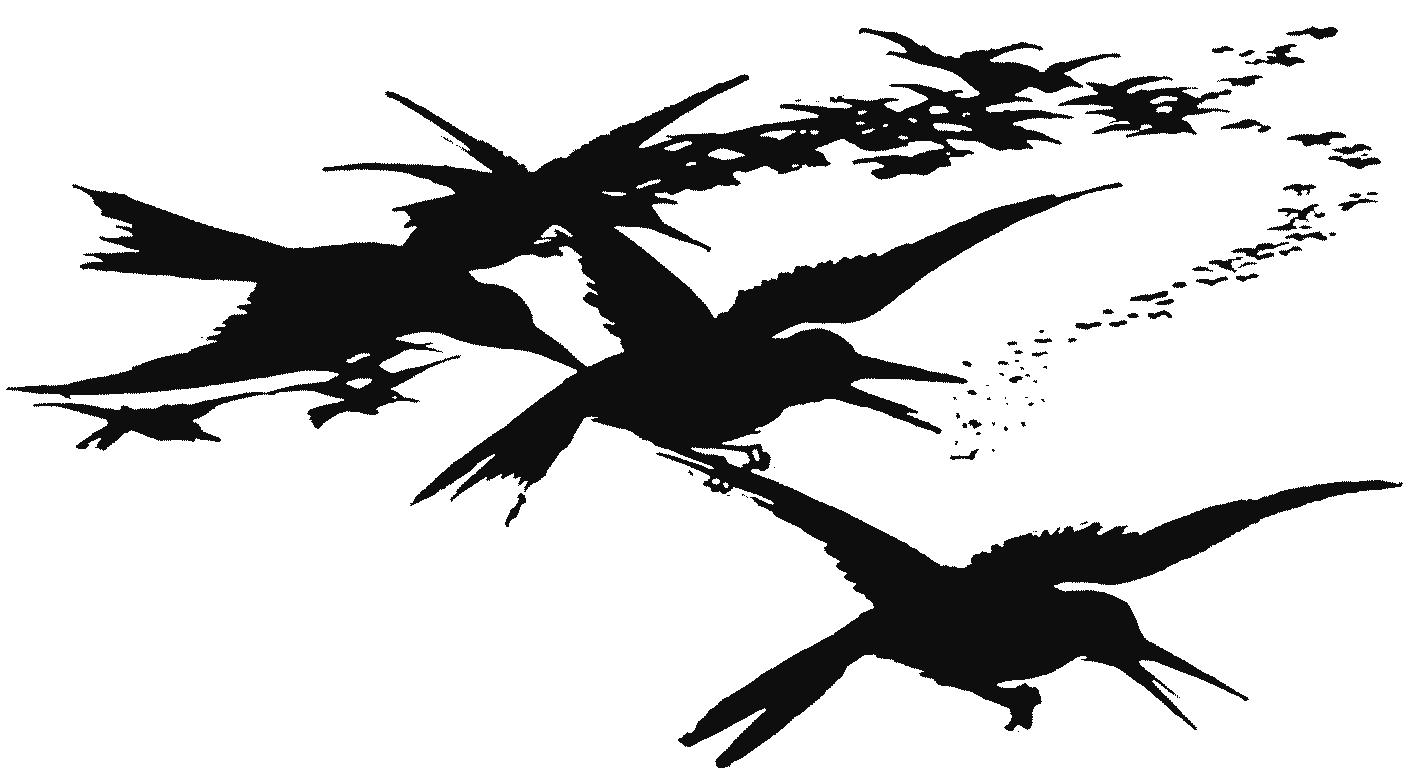 Illustration, Krähen, Schwarm, Vögel